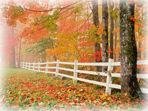Ulster County Fall Foliage